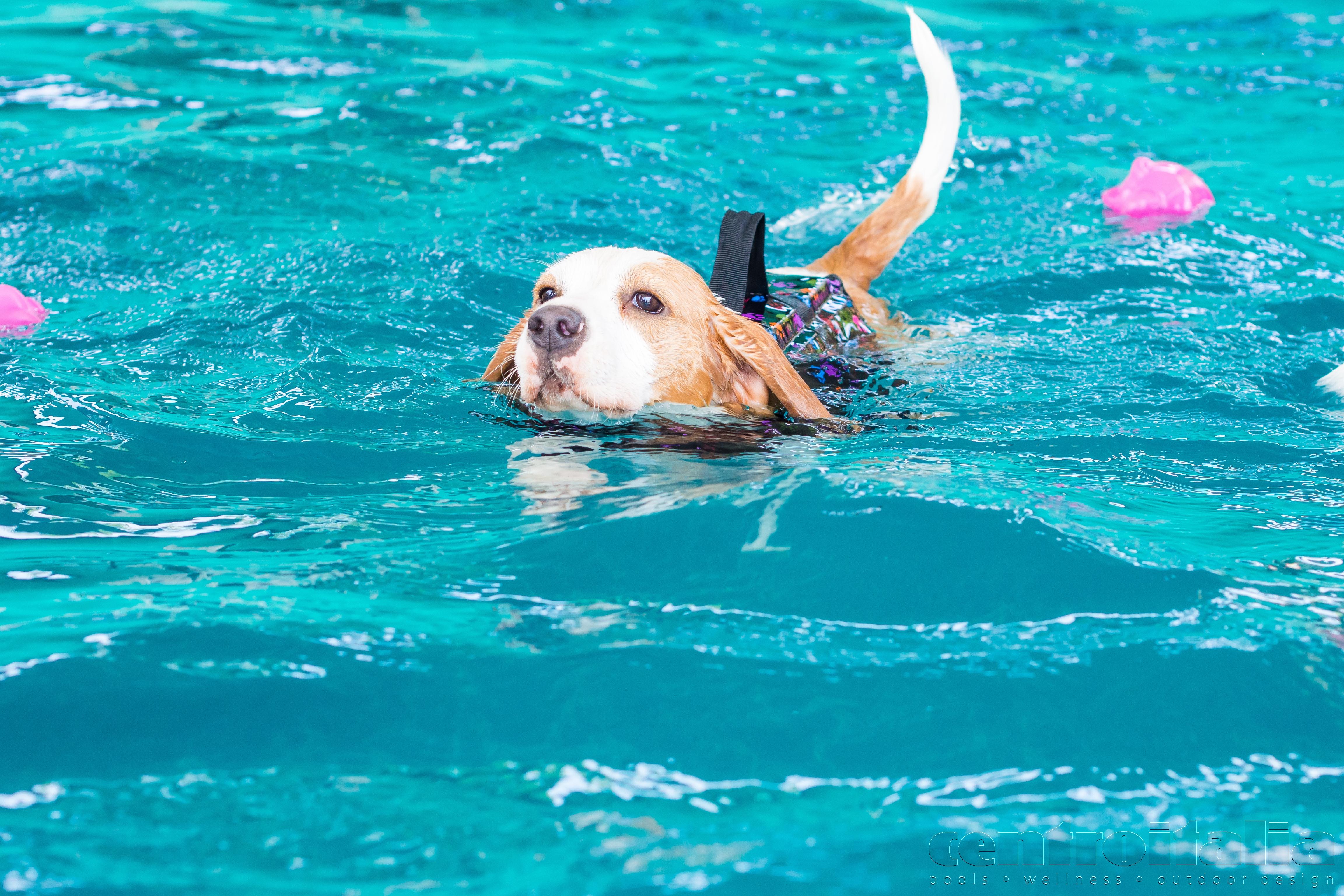 Piscina Spa per cane e padrone. Scopri la piscina uomo cane