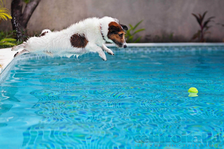 tutto in piscina di un cane
